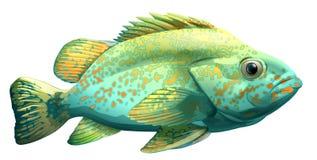 Un pescado ilustración del vector