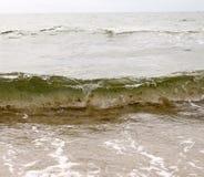 Un pescado en la onda Imágenes de archivo libres de regalías