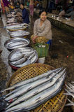 Un pescado grande en MYANMAR - BIRMANIA Fotos de archivo