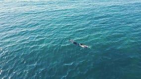 Un pescador Swiming With An Harpon almacen de video