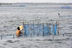 Un pescador tiende a su trampa del camarón en el mar bajo adyacente al terraplén que lleva de Jaffna a la isla de Velanai Imágenes de archivo libres de regalías