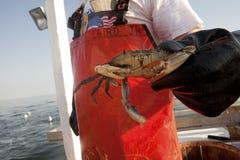 Un pescatore che tiene un granchio Immagini Stock