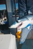Un pescatore che tiene uno squalo mako Fotografia Stock