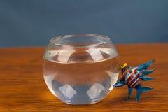 Un pesce da acqua fotografia stock