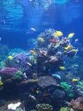 Un pesce del pesce quattro del pesce tre del pesce due Fotografia Stock Libera da Diritti