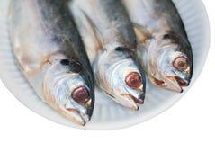 Un pesce di tre sgombri sul piatto di carta è isolato su fondo bianco Fotografia Stock