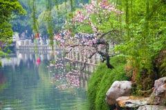 Un pesco in piena fioritura sulla banca del fiume fotografia stock