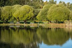 Un petit étang en parc Photo libre de droits