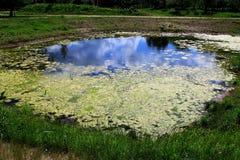 Un petit étang en parc de ville au printemps au soleil images stock