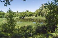 Un petit étang un jour ensoleillé images stock