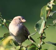 Un petit animal d'oiseau naturel Image stock