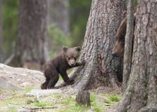 Un petit animal d'ours Photo stock