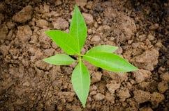 Un petit arbre Photos libres de droits