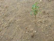 Un petit arbre Photographie stock libre de droits