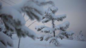 Un petit arbre de Noël banque de vidéos