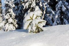 Un petit arbre de Noël sous la neige Photographie stock