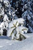 Un petit arbre de Noël sous la neige Photo libre de droits