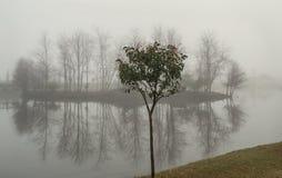 Un petit arbre derrière une île brumeuse Photo libre de droits