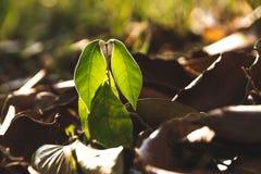 Un petit arbre pendant l'automne images libres de droits