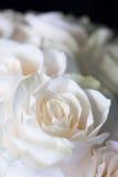 Un petit bouquet des roses rose-clair Images stock