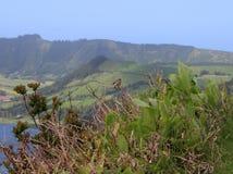 Un petit bouvreuil des oiseau-Açores se repose sur une branche par le lac dans Sete Cidades L'île de San Miguel Photos stock