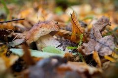 Un petit champignon dans les avants Photos stock