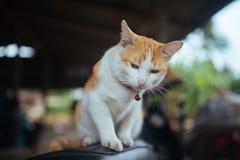 Un petit chat Image stock