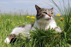 Un petit chat est décontracté dans l'herbe Photos libres de droits