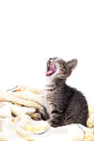 Un petit chaton gris baîllant sur une couverture jaune molle Photo libre de droits