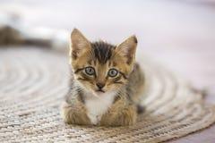 Un petit chaton mignon regardant l'appareil-photo Photographie stock libre de droits