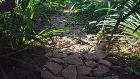Un petit chemin en pierre entre les buissons verts, présentés dans le jardin, la caméra se déplace du fond banque de vidéos