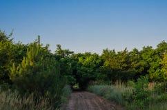 Un petit chemin forestier parmi des bosquets d'acacia sauvage La route menant à The Creek Sports de matin pulsant dans les bois photos libres de droits