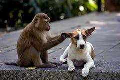 Un petit chien avec un singe image libre de droits