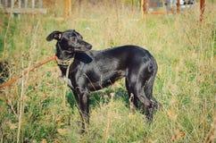 Un petit chien métis noir se tient dans le pré image libre de droits