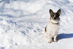 Un petit chien se reposant sur la route neigeuse Photographie stock libre de droits