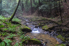 Un petit courant de truite dans les Appalaches Photos stock