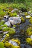Un petit courant en Sibérie du nord L'eau parmi la mousse et des pavés ronds Images stock