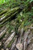 Un petit courant traverse des falaises de chaux photos libres de droits