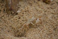 Un petit crabe sur le sable photos stock