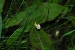 Un petit escargot se repose sur l'herbe verte L'escargot est alon de rampement Photographie stock