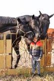 Un petit garçon se tient près des chevaux noirs outdoors images libres de droits