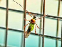Un petit insecte a ?t? en passant vu sur une fen?tre photos libres de droits