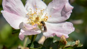 Un petit insecte mangeant en fleur photographie stock libre de droits