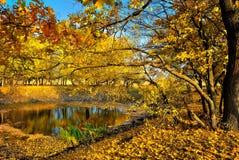 Un petit lac dans la forêt d'automne Photographie stock libre de droits