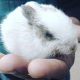 Un petit lapin mignon de bébé Photographie stock libre de droits