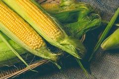 Un petit maïs jaune Photo stock