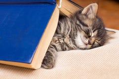 Un petit minou rayé dort sous le livre L'enfant est tombé aslee images stock