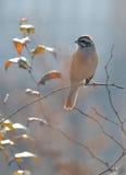 Un petit oiseau Images libres de droits