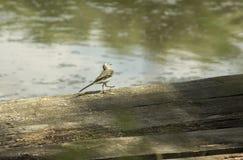 Un petit oiseau Photo stock