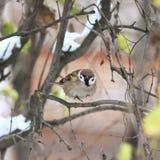 Un petit oiseau dans une branche d'arbre Photographie stock libre de droits